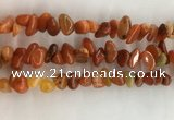 CAA3807 15.5 inches 8*12mm - 10*14mm chips red agate beads wholesale
