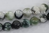 CAA702 15.5 inches 10mm round tree agate gemstone beads wholesale