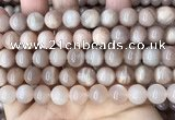 CMS1673 15.5 inches 10mm round moonstone beads wholesale