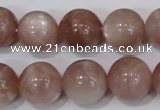 CMS756 15.5 inches 14mm round natural moonstone beads wholesale